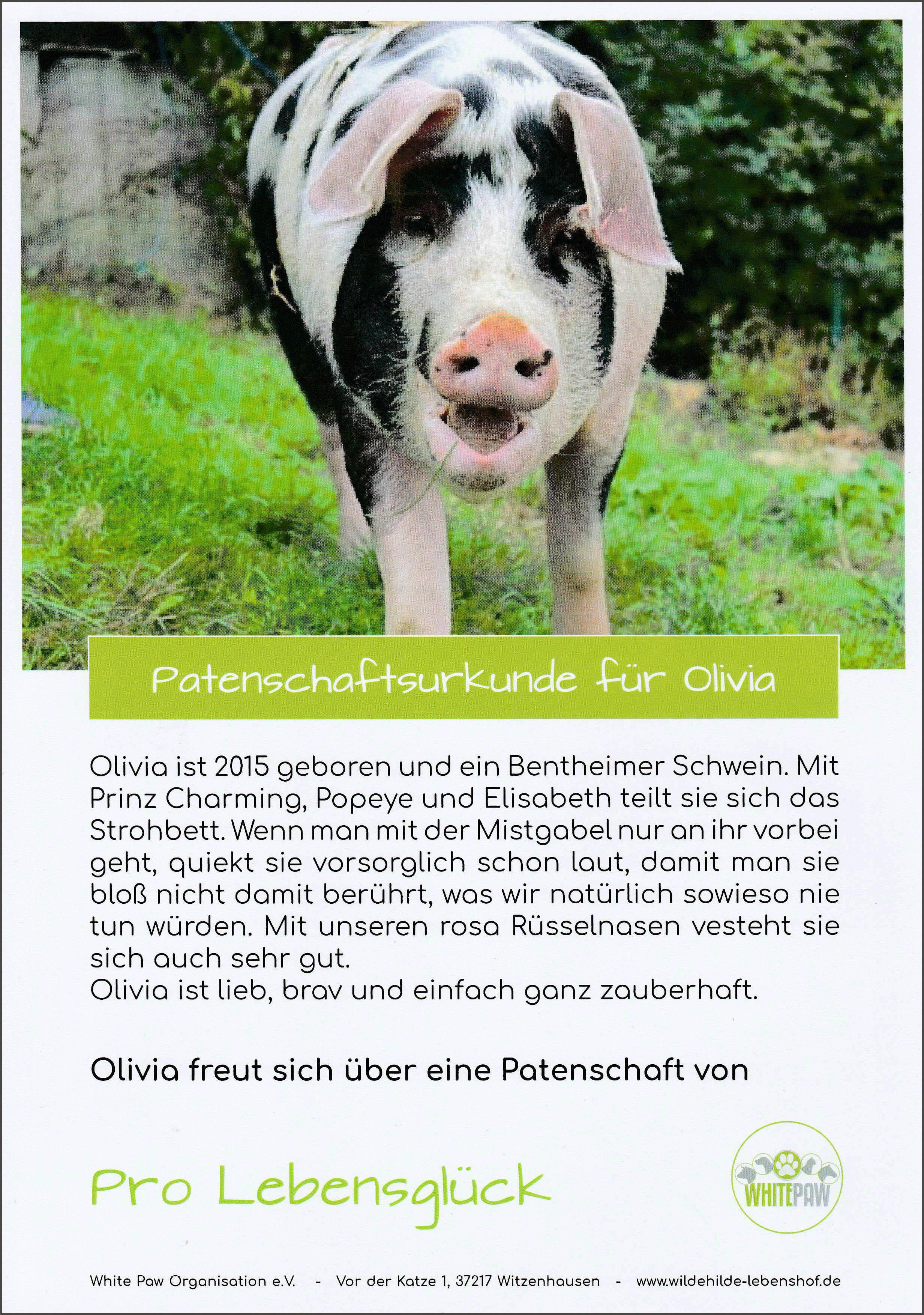 Olivia von White paw